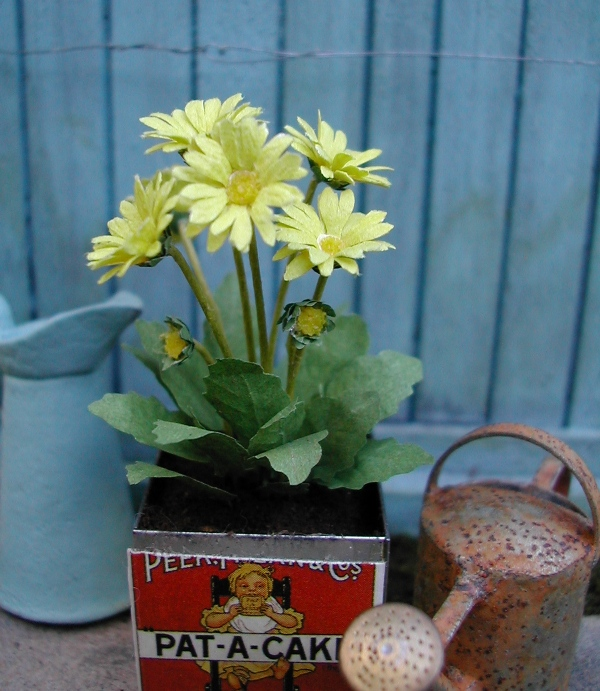 Gallery of with gerbera plant in de tuin for Gerbera in de tuin